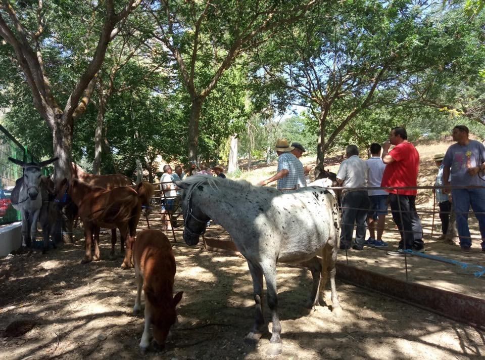Feria de ganado 2