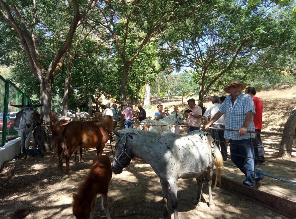 Feria de ganado 3